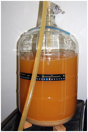 cider-transfer-web